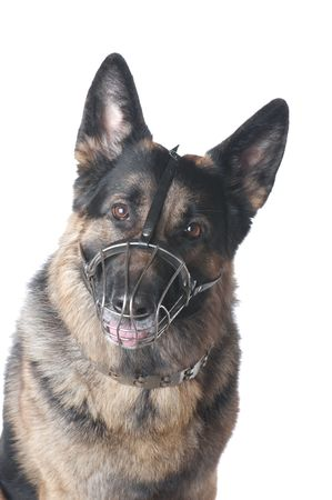 object on white - DOG German shepherd Stock Photo - 4192598