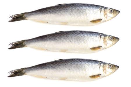 object on white - fish herring close up Stock Photo