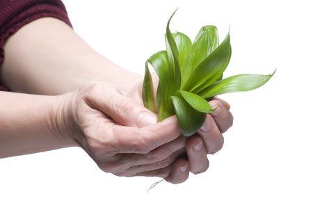 object isolatsd on white background Plant on hand photo
