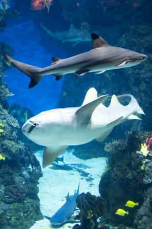 country Spain - Barcelona Aquarium close up photo