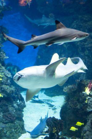country Spain - Barcelona Aquarium close up