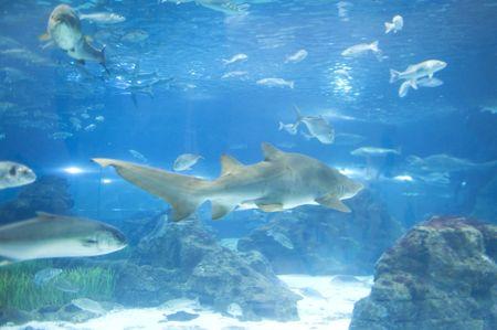 country Spain - Barcelona Aquarium close up photo