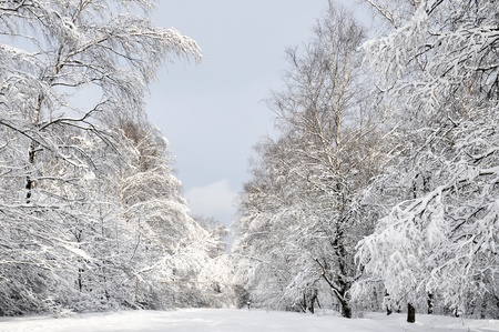 seasonal winter landscape -  in the forest photo