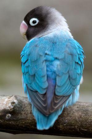 it a blue bird
