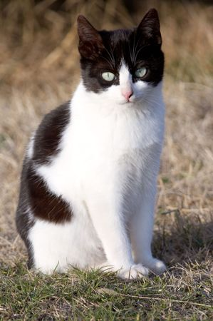 it is a cat black and white Stock Photo - 438577