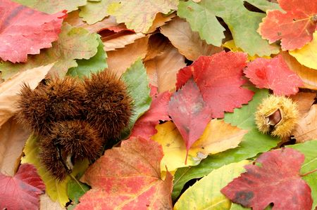 they are pinceladas of the autumn photo
