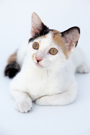 cat in isolated white bottom Stock Photo