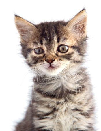 small cat of angora on white bottom Stock Photo - 597212