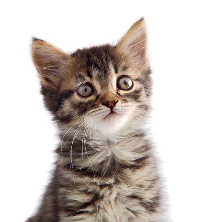 small cat of angora on white bottom Stock Photo - 597211