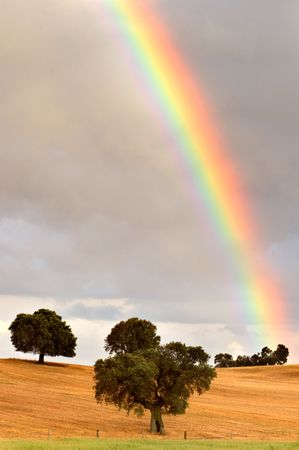 pretty rainbow in a field with trees photo