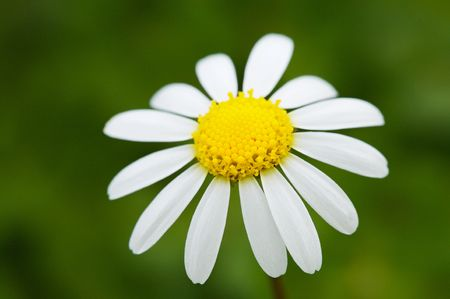 a pretty flower in the field in spring