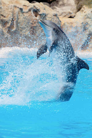 porous: able,adorable,animal,aquatic,atlantic,beached,blue,bottle,bottle-nose,boy,captivity,caretaker,creature,cute,dauphin,dolphin,fin,fish,flipper,game,grey,happy,intelligent,jaws,life,like,lion,male,mammal,marine,mouth,nose,ocean,oceanography,playful,porous,po
