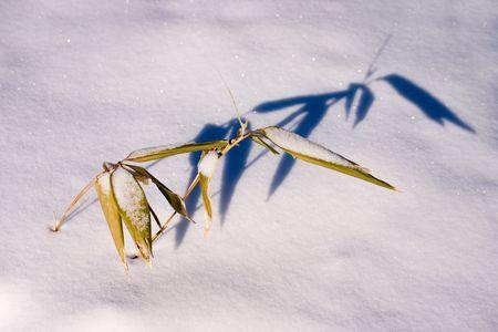 hojas secas: brote de bamb� con hojas secas