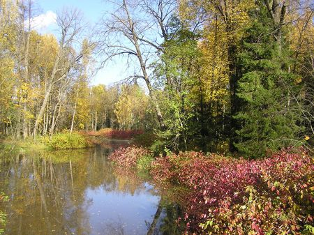 Pond in the autumn park