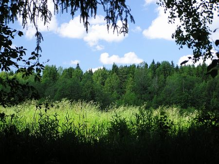 Sunny glade in a forest Stock Photo