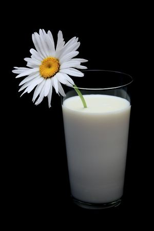 Daisy in glass of milk, on black background