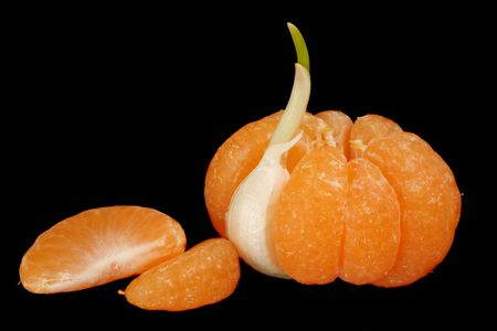 Mandarin with one segment replaced by garlic clove and two separate mandarin segments, isolated on black