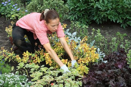 kneeled: Kneeled young woman planting out flowers in a garden Stock Photo