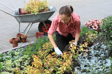 Young woman planting out flowers sprouts in a garden