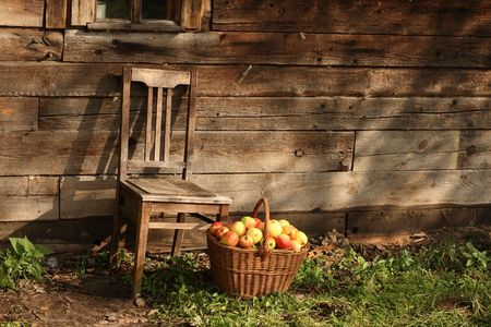 Old chair and basketful of apples against wooden wall in sunny day