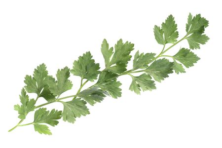 Ornamental element, stripe composed of parsley leaves, isolated on white background