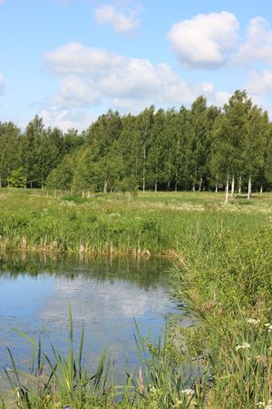 Russian landscape. Pond, meadow and birch grove Stock Photo - 3364316