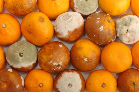 Organic background. Tangerine fruits damaged by green mould