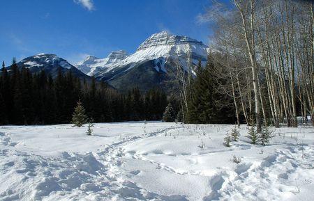 snow capped: Nevadas, las Monta�as Rocosas de Canad�
