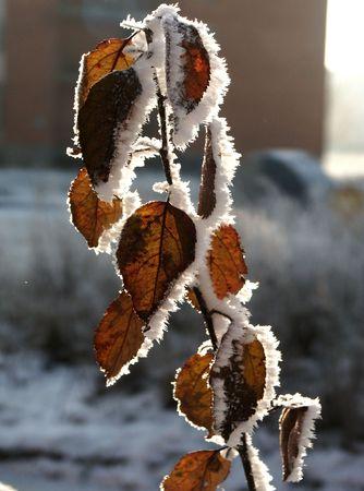 winter leaf: Winter leaf