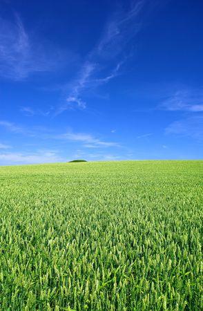 Farmland in Denmark photo