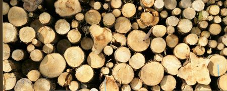 Woodpile Stock Photo - 585032