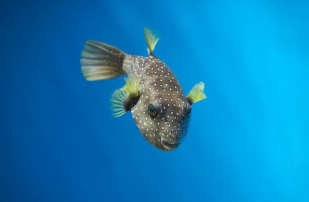 Tropical waters Stock Photo - 585013