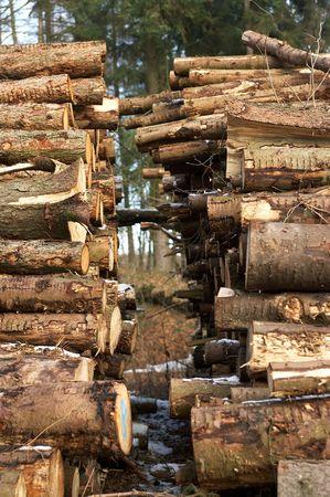 Woodpile Stock Photo - 584999