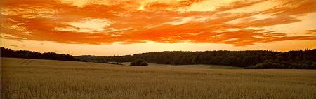 Danish corn fields Stock Photo - 584974