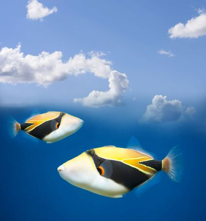 Flying tropical fish Stock Photo - 589171