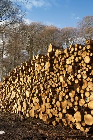 Woodpile Stock Photo - 589230