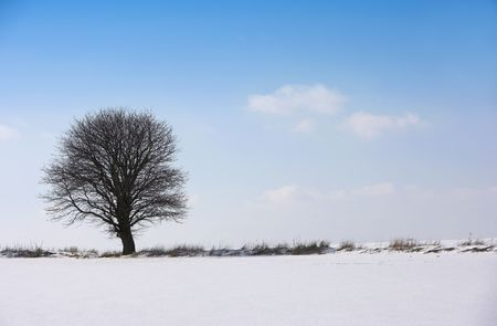 Lonely winter tree photo