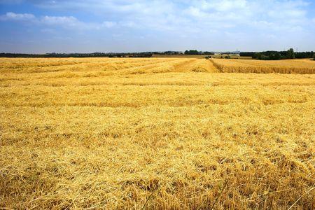 Harvest (useful as background) photo