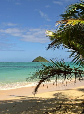 Palm and beach (Hawaii)