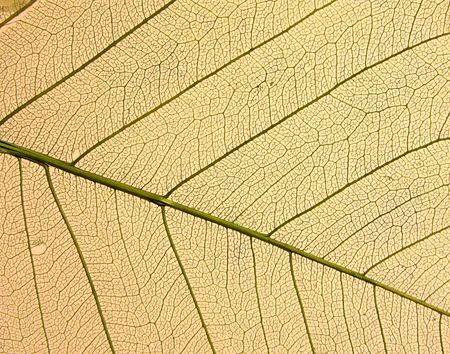 Dry leafs Stock Photo - 680615