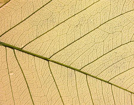 Dry leafs photo