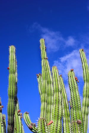 Cactus Stock Photo - 680858