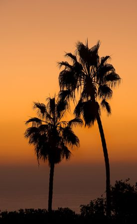 Palm at sunset - at the beach photo