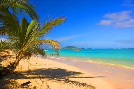 Photo of tropical beach with palms