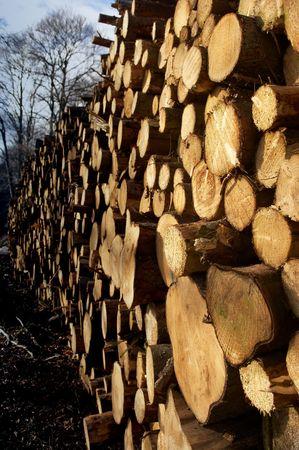 Woodpile Stock Photo - 739963