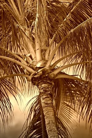 Photo of palms in tropical settings Stock Photo - 737753