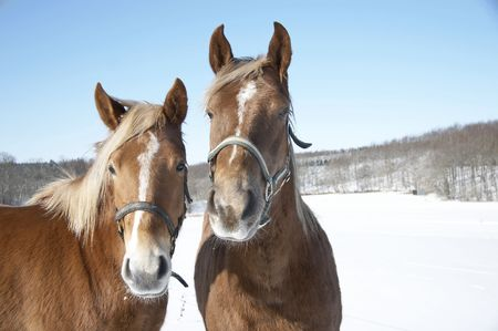 Photo of horse in wintertime a sunny day Stock Photo - 740395