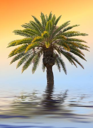 Photo of palms in tropical settings photo