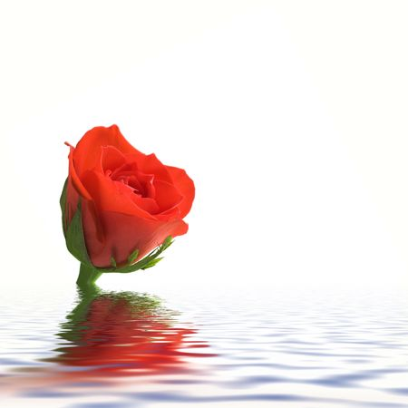 Photo of , red rose in water Stock Photo - 750780