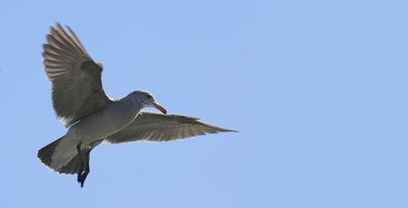 Photo of flying sea gull photo